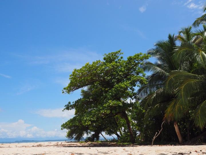 Bocas1